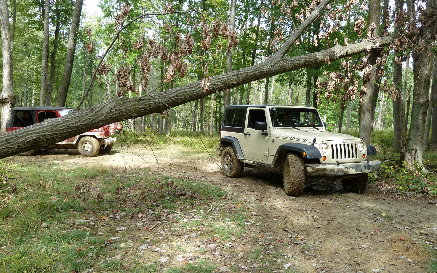 2011 Jeep Jamboree Jeeps Crossong A Tree
