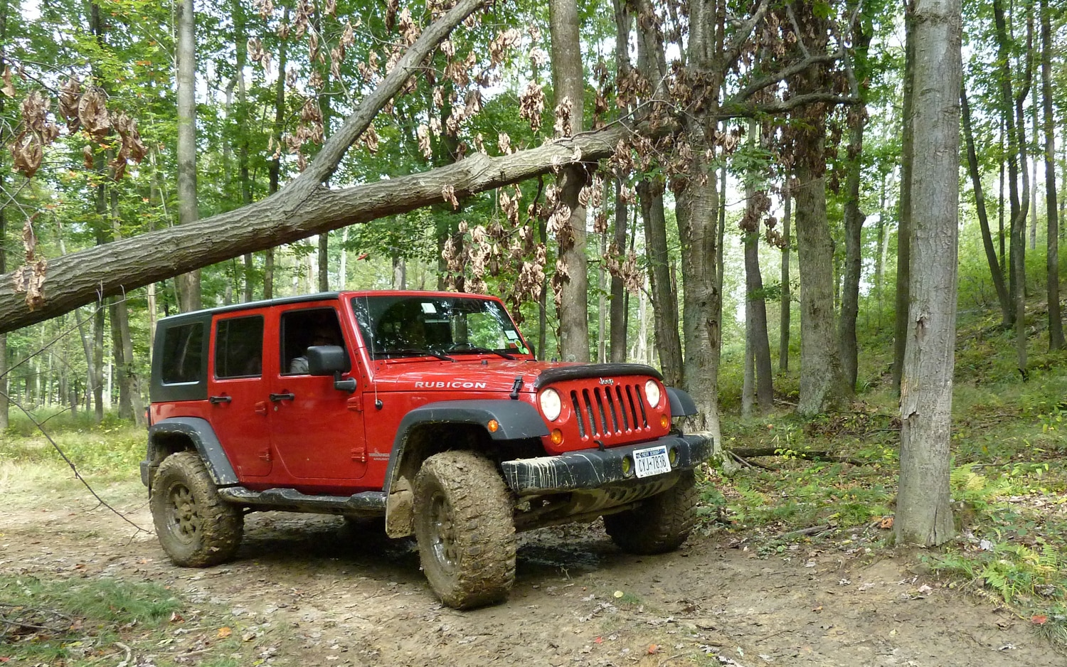 2011 Jeep Jamboree Under A Tree