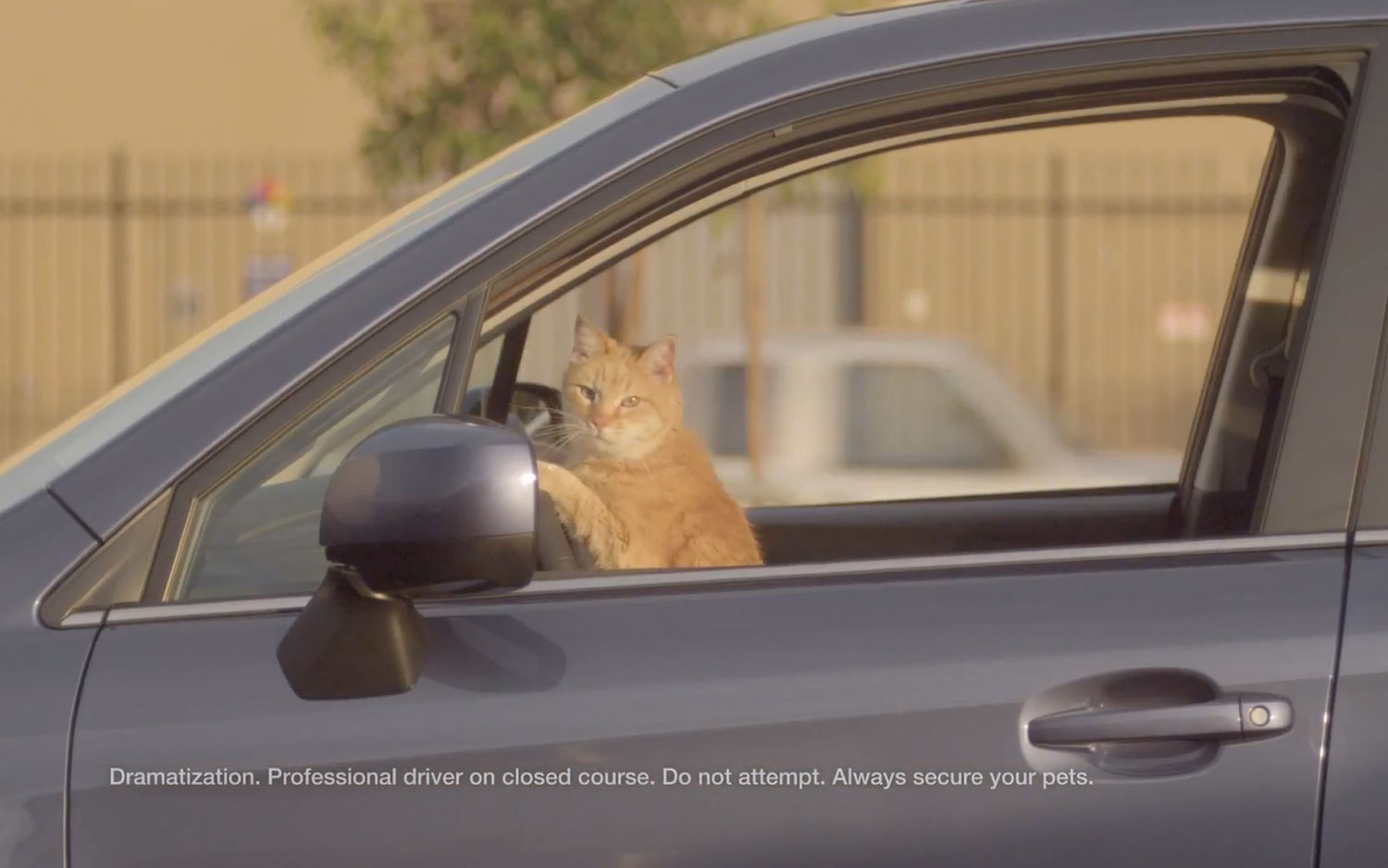 2014 Subaru Forester Cat Driving Car