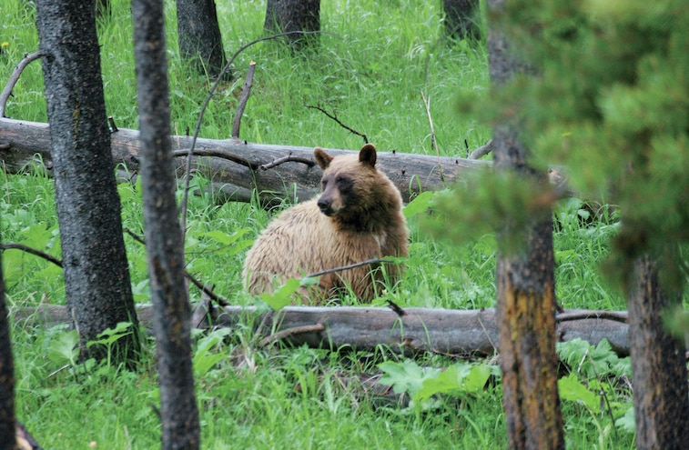 RVs And Bears - Safe Camping in Bear Country
