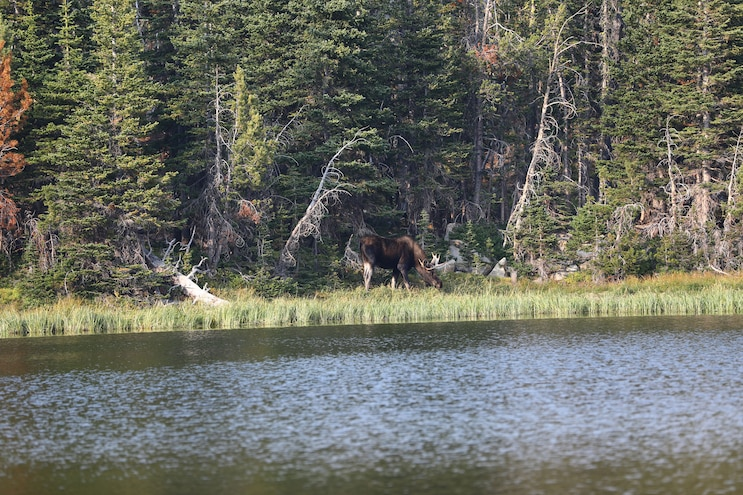 37 Ua20 Bull Moose In Montana On Ultimate Adventure 2020